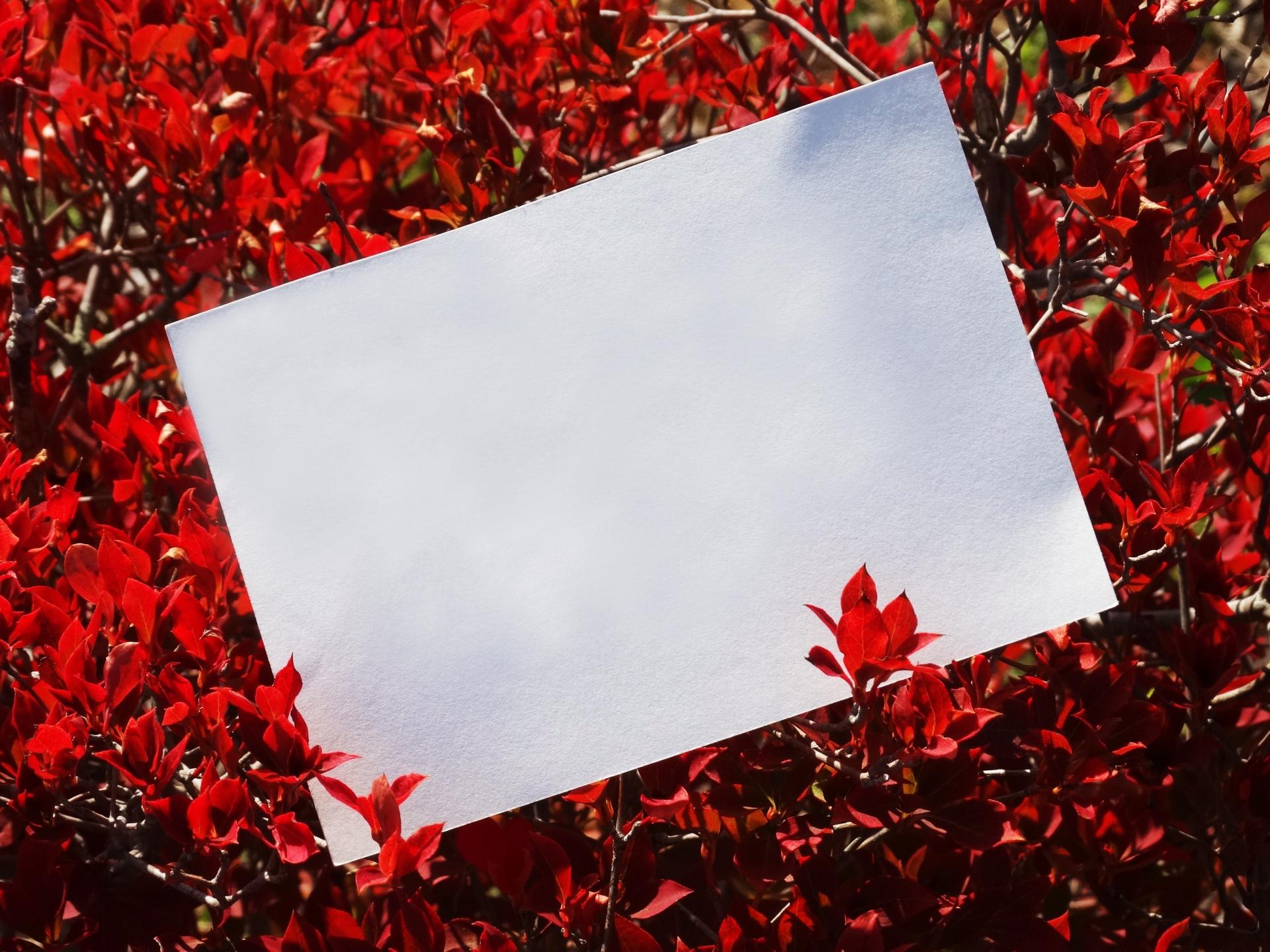 お歳暮お礼状をはがきで送ろう!文例・例文と使えるイラストを紹介!