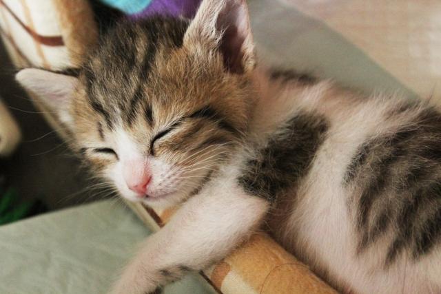 赤ちゃんの猫アレルギーはいつから出始める?症状と予防対策法まとめ