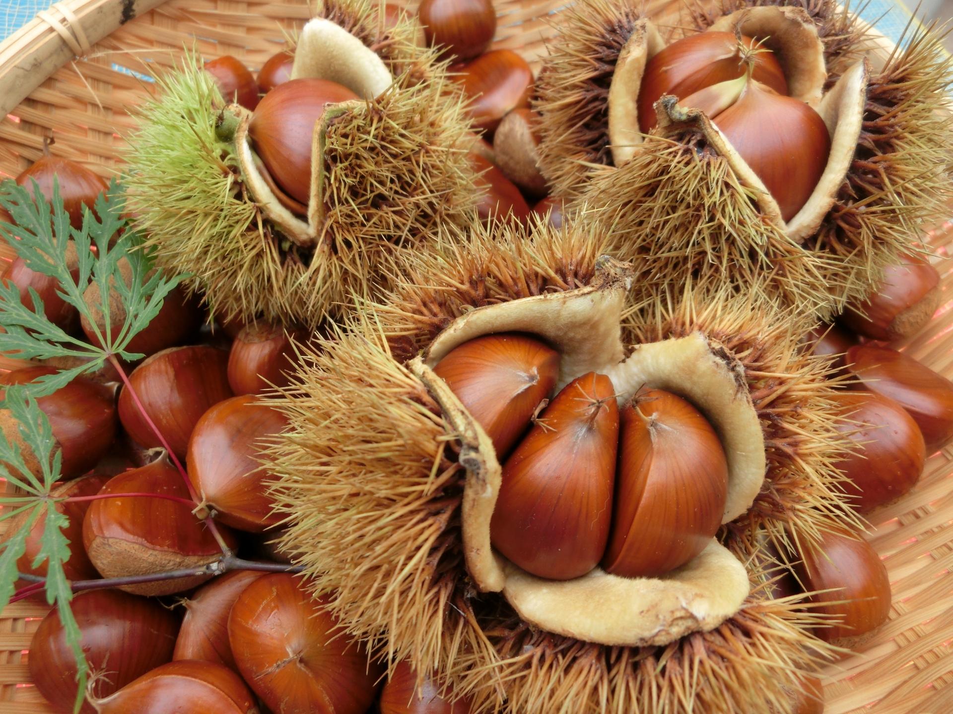 栗が美味しい季節です。栗ごはんやスイーツなど栗を使ったオススメレシピとゆで方・皮むきのコツ