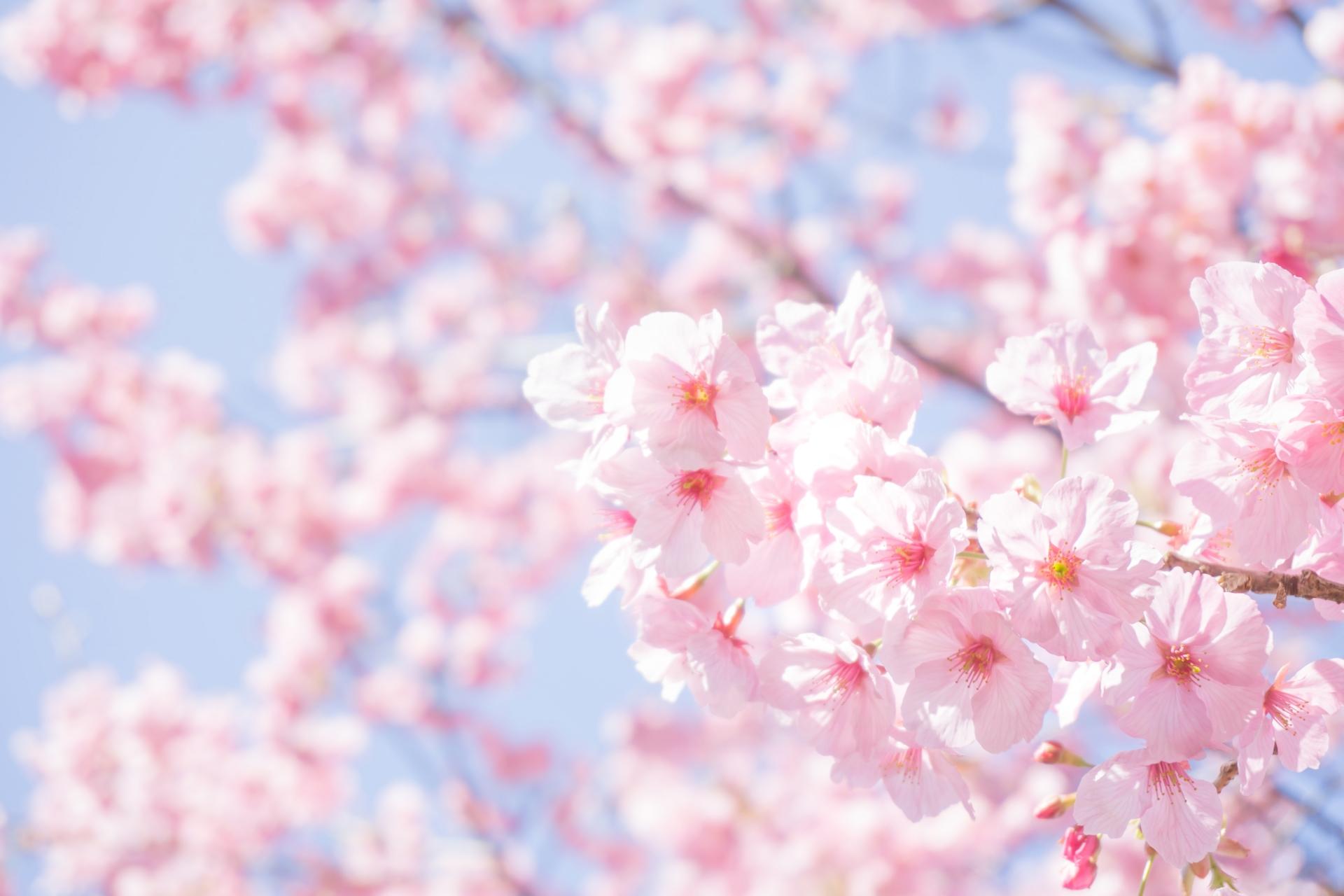 【ビジネスでも活用】3月の時候の挨拶の使い方と例文