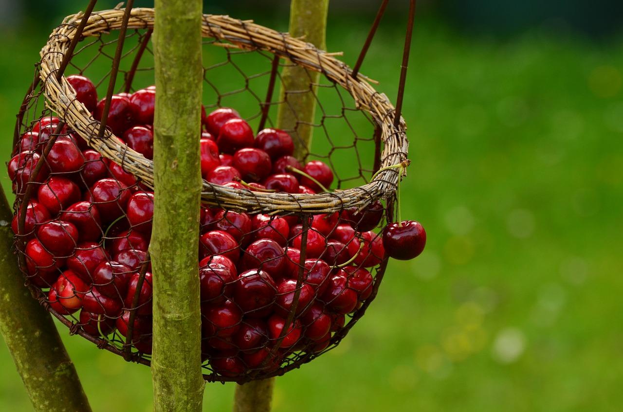 cherries-1503974_1280