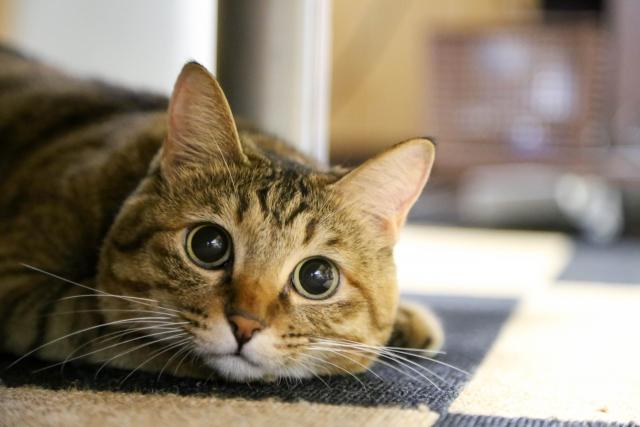 猫の慣用句・ことわざとその使い方・例文